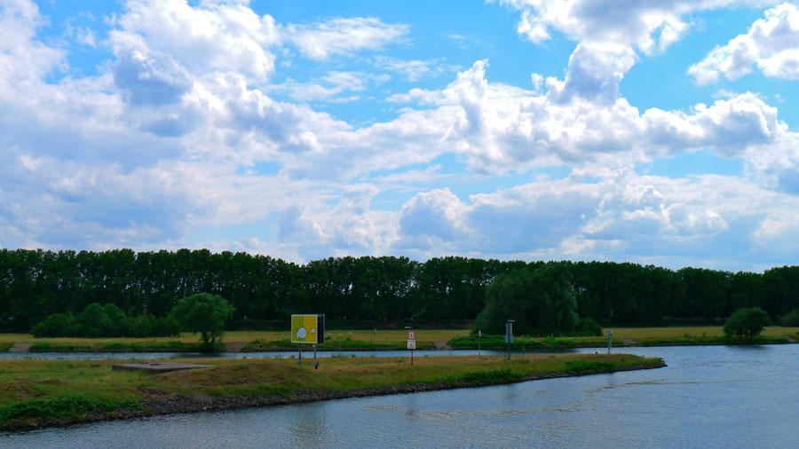 Rheinschafe in Duisburg, Ruhrmündung